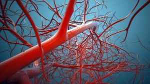 3D Printed Vascular Patches with Patterned Channels Used to Grow Organized Blood Vessels in Mice (3dprint.com)